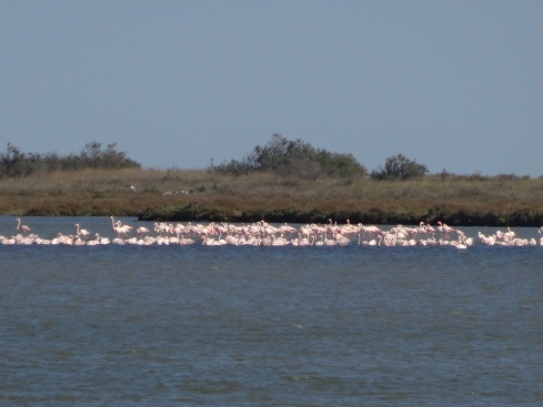 Flamingos in the distance across the salt marsh.