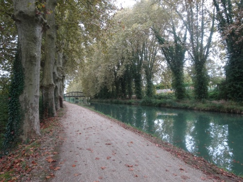 Trail by canal lined with plane trees.